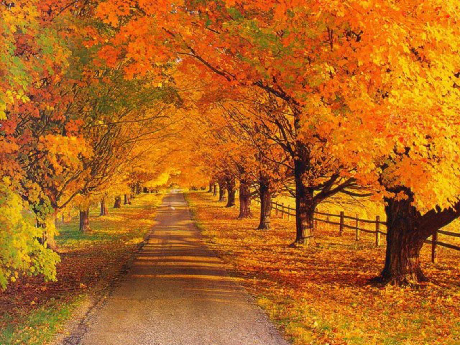 ЛитКульт — Литературный конкурс «Осень. Начало» (голосование!)