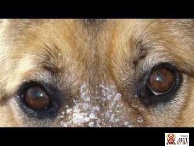 Прощай собака стих