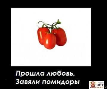 вид тип а ткаченко когда завянут помидоры женщин это