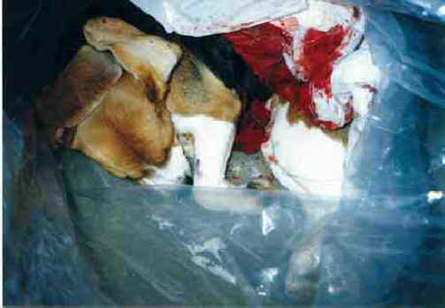 animal experimentation is unnecessary and cruel